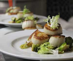 Scallops for dinner, anyone?